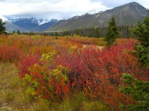 Hiking Cottonwood Trail, Kluane Park